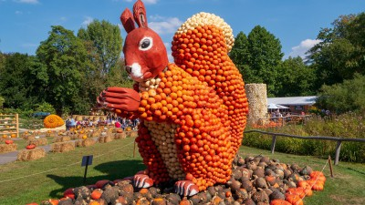 Departure Graf: Ludwigsburg Pumpkin Festival
