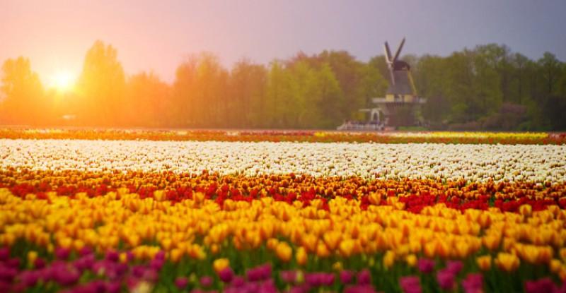 Explore Europe Amsterdam s 6