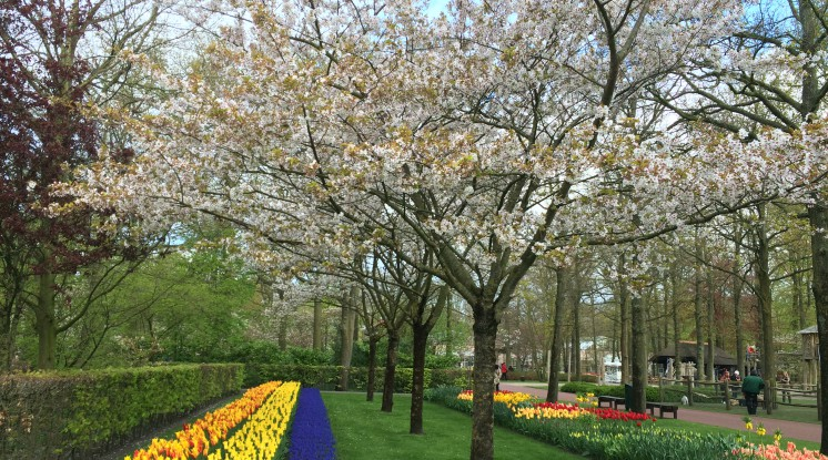 Departure K-Town: Amsterdam & the Keukenhof Gardens (incl. City Canal Cruise)