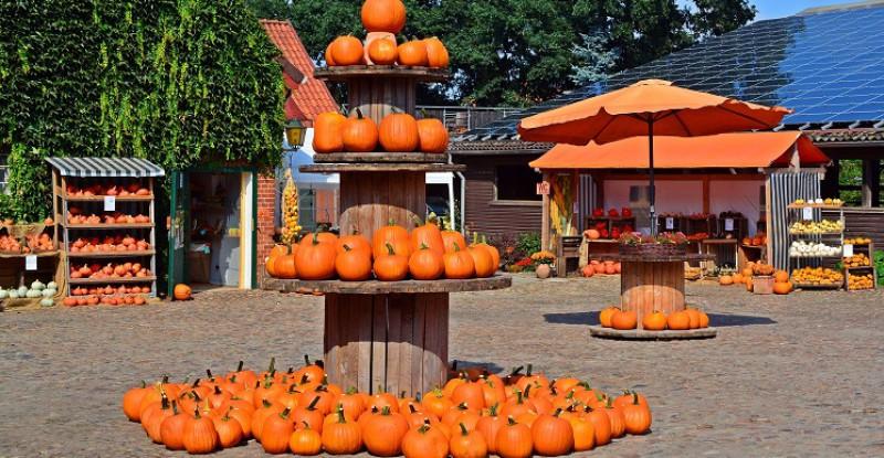 pumpkin-1642417_1920