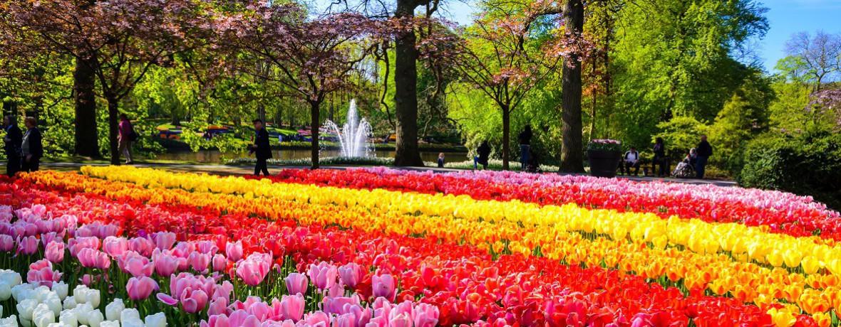 Departure Graf: Amsterdam & Keukenhof Gardens